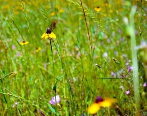 F1 Wildflower Yellow